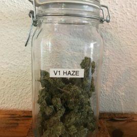 V1 Haze